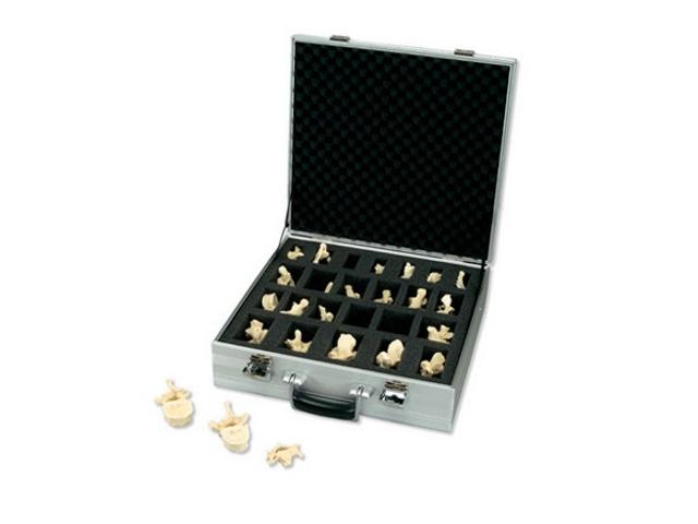 Set mit 24 Bonelike Wirbeln
